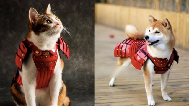 猫&犬用の「ペット鎧」が可愛くって勇ましいいいい♡  「お猫様」「お犬様」と呼びたくなります