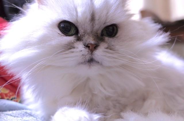 【注意】犬や猫も熱中症になるよ! お留守番させるときもエアコンはマストです
