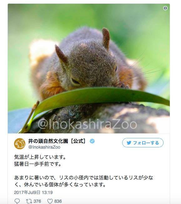 【あぢぃ~】井の頭自然文化園のリスたちの涼み方が人間ぽい / 毎日暑いもんね…気持ちわかるよ