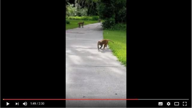 猿ってこんなに怖いんだ…! 少年が撮影した「野生の猿の群れが追いかけてくる動画」が予想以上にスリリング