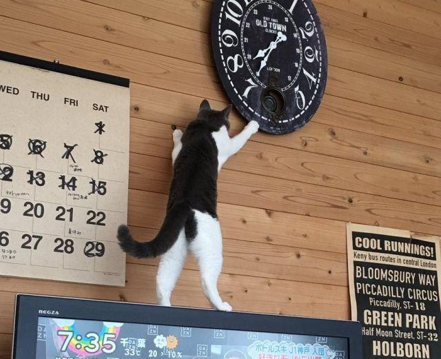 リビングの時計の時間がよくズレるな~と思っていたら…とんでもキュートな時間泥棒の正体が判明したと話題です♪