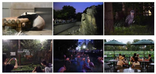 夜の動物園に入れるチャンス♪ 上野動物園名物「真夏の夜の動物園」が今年も開催されます
