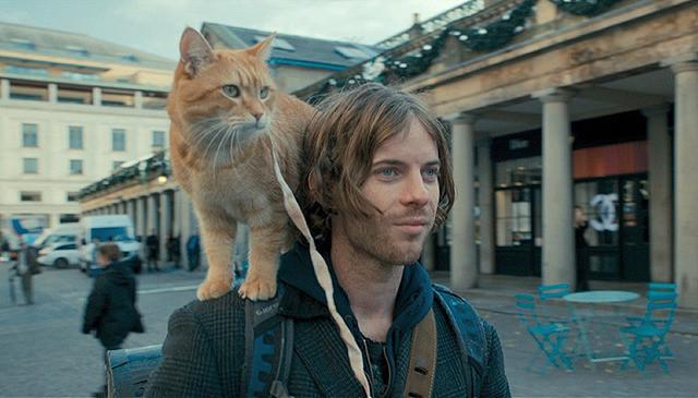 猫との出会いで貧困生活を送っていた青年の人生が変わった実話映画『ボブという名の猫 幸せのハイタッチ』【最新シネマ批評】