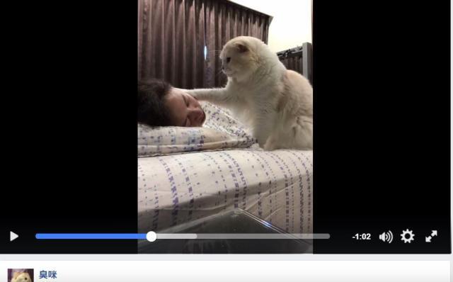 「ご主人、起きてくださいまし…」肉球で優しく顔をタッチして起こす猫さまが激しく可愛らしいですっ