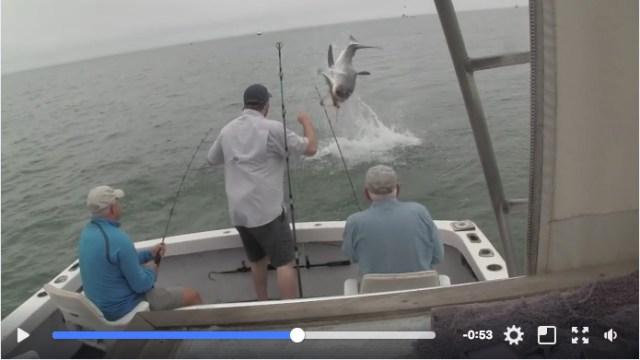 海で釣りをしていたらサメが…次の瞬間!! サメが大きく跳ね上がる → 釣っていた魚が豪快に横取りされました