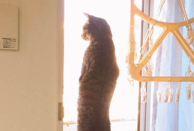 猫なのに猫背じゃないとはこれいかに? 背中で人生語ってるみたいな超絶姿勢のいいニャンコが話題だよ