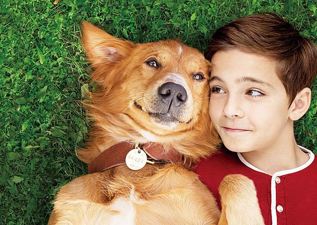 ペットは誰よりも飼い主を見ていた…何度も生まれ変わって飼い主を探すワンコの目的とは? 映画『僕のワンダフル・ライフ』【最新シネマ批評】