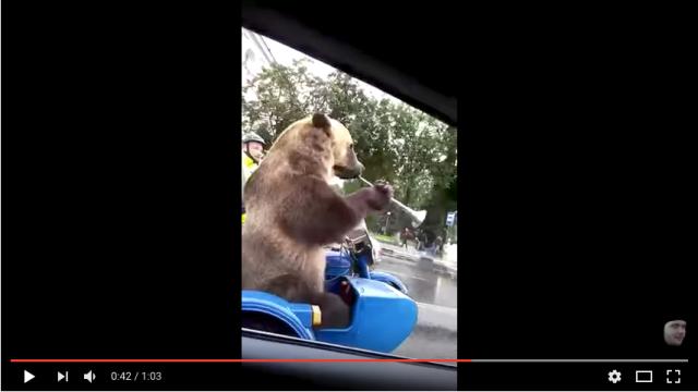 【おそロシア】 運転していたら隣のバイクのサイドカーにでっかい「クマ」が乗ってたんですけどーーー!!!