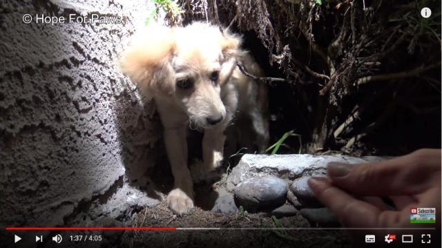 茂みの中に隠れてた子犬を救助! マイクロチップが埋め込まれていたので飼い主に連絡してみたら…