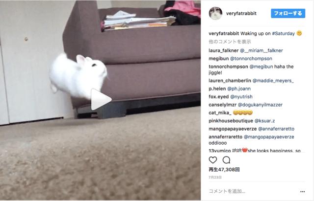 「もしやウサギって液体?」体がブルンブルンするジャンプ動画が激萌えです