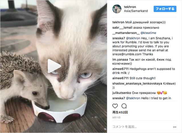 猫とネズミがとうとう和解!? 仲良く並んでミルクを飲むニャンコとハリネズミが目撃される