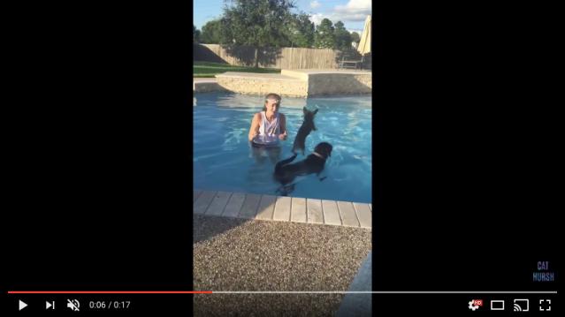 「プールにおいで!」2匹のワンコに呼びかけると…怖がっていた小さいワンコが勇気を出した結果