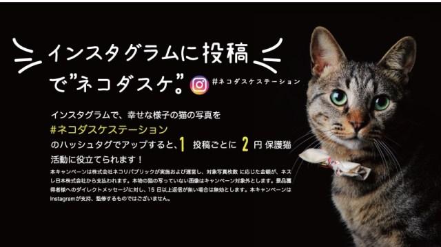 【猫助け】インスタに幸せな猫の写真を投稿するだけで2円募金される♪ 保護猫活動に気軽に貢献できるキャンペーンが実施中だよ