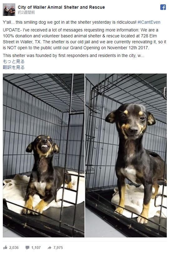 【笑う犬】ニッコリ笑顔の保護犬が大反響! 動物シェルターの宣伝にもひと役買った模様です