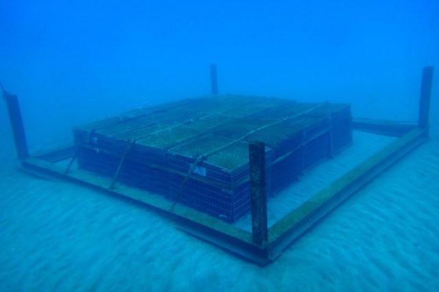 沈没船から引き揚げられたみたい? 海底で熟成させたロマンチックな赤ワイン「SUBRINA」