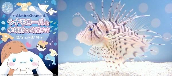 京都水族館とシナモロールのコラボが始まるよっ! 「ふわふわ」な生き物たちの展示やコラボカフェ&オリジナルグッズもあり♪