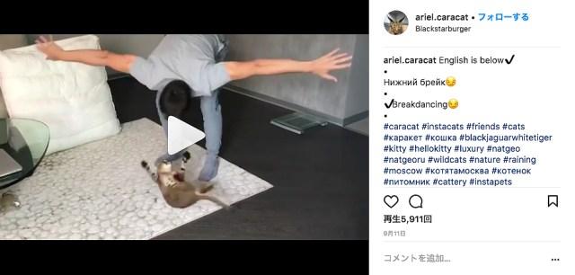 【愛が激しい】猫と全力で遊ぶ飼い主男性に「いいね」が止まらない! ときには猫が警戒しすぎて毛が逆立ってしまうことも!?
