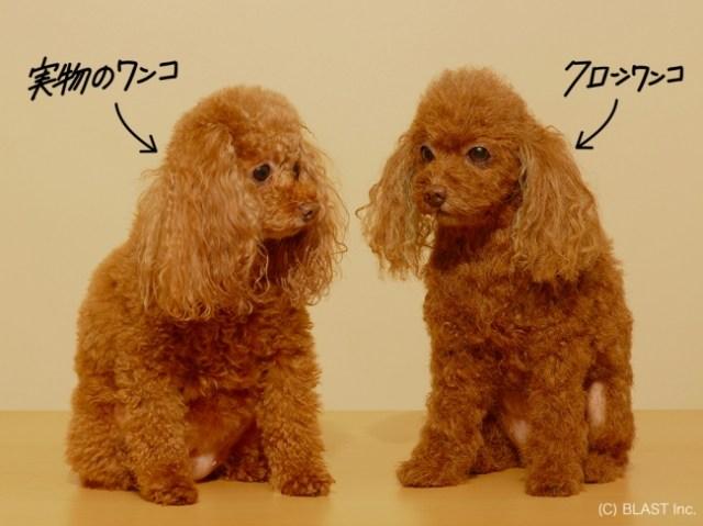 愛犬を超絶リアルに再現してくれる「クローンワンコ」がマジでクローン! ただしお値段は300万円から…