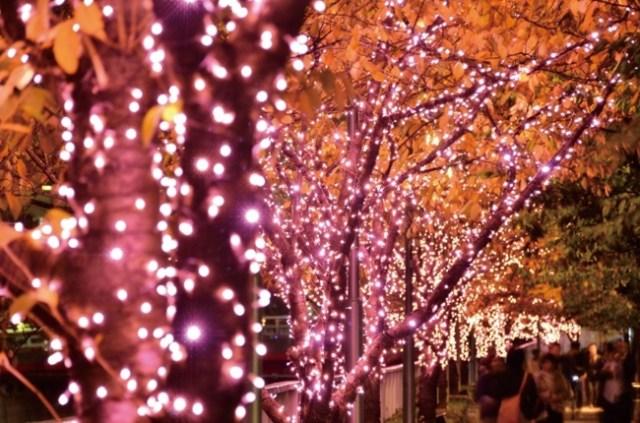 """目黒川に""""冬の桜""""が咲く「目黒川みんなのイルミネーション2017」が開催中 / お花見スポットとしてテントも設置されています"""