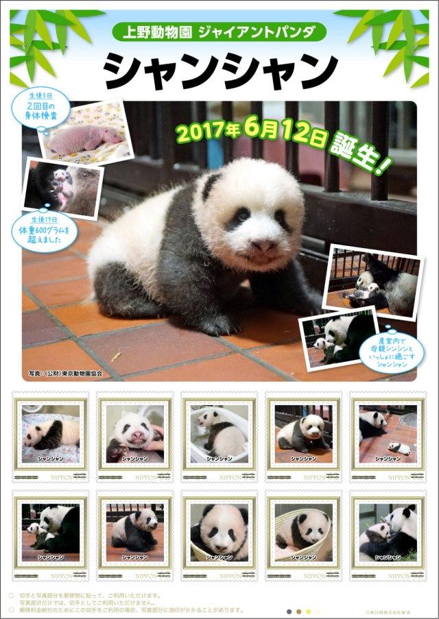【きゃわあああ♡】上野動物園の子パンダ「シャンシャン」の切手セットが発売されるよ〜! 成長日記とクリアファイルも付いてきます