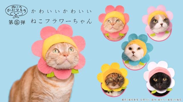 【ねこのかぶりもの】ニャンコがお花に♡「かわいい かわいい ねこフラワーちゃん」が2017年を締めくくる華々しさ