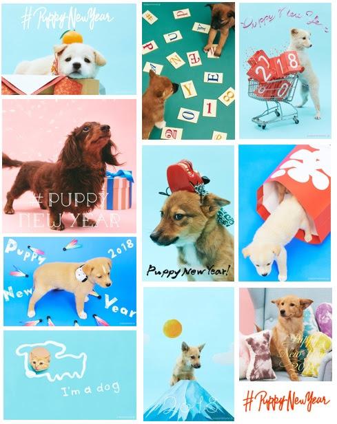 年賀状で里親探しのお手伝い! 保護犬がモデルのフリーデザイン年賀状サイトで人間もワンちゃんもハッピーに♡