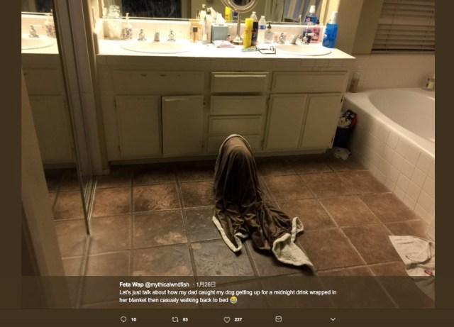 バスルームにオバケが現れた! ピチャピチャと奇妙な音を立ててるけど…実はブランケットをかぶったワンコでした