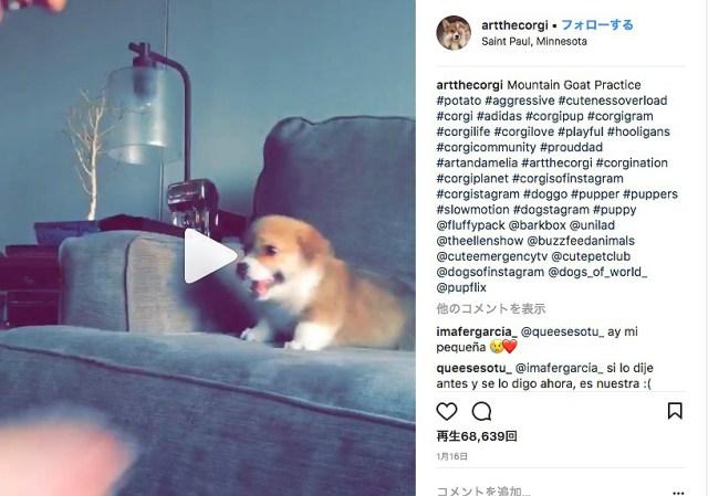 かわいすぎ注意報発令!! 甘えたい子犬 vs 子犬をソファに座らせたい飼い主の一部始終をご覧ください