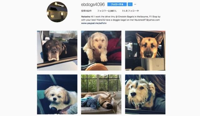 ドライブスルーに来るワンコ達をパシャり★ 犬好きの店員さんがアップし続けるアカウントが大人気です