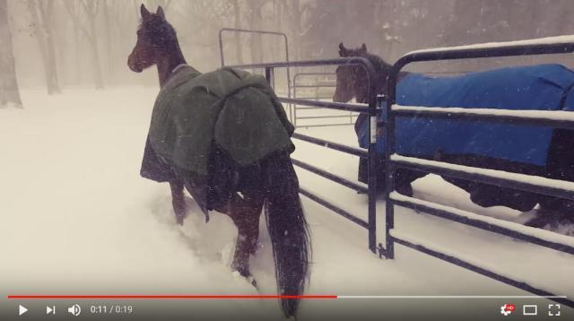 馬「え…寒すぎじゃね?」銀世界に飛び込むも10秒で小屋へと戻るお馬さんたち