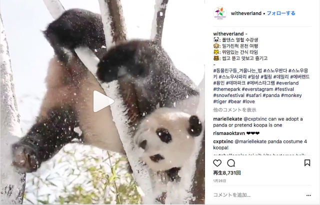 雪とたわむれるジャイアントパンダが可愛すぎ♡ でもクマの仲間なのに冬眠しないのはなぜ?