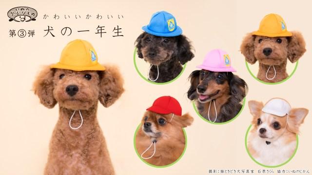 愛犬が「小学1年生」になったら…可愛くないわけがないっ♪ 「いぬのかぶりもの」シリーズに通学帽&紅白帽バージョンが登場しました