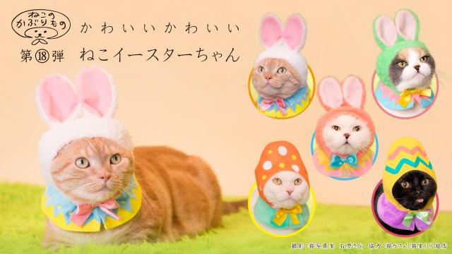 【ねこのかぶりもの】ニャンコがカラフルなうさぎと卵に変身!? 「かわいいかわいいねこイースターちゃん」が悶絶級のかわいさ