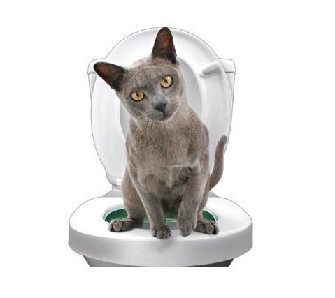 【猫飼いさんに朗報】ニャンコが人間用のトイレを使えるようになる!? 猫用トイレ訓練具「Litter Kwitter」が革命的☆