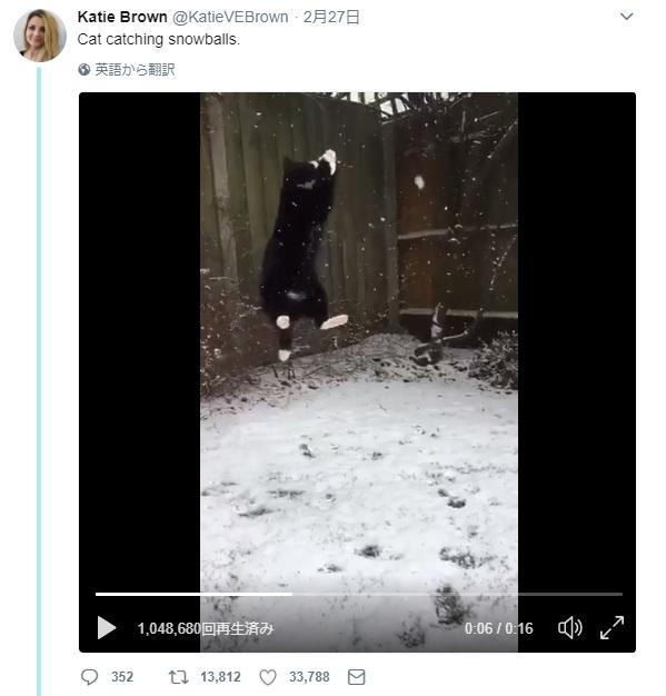 猫がジャンプからの雪玉をキャーーッチ!!の動画がかなりスゴイ / 「次の冬季オリンピックに参加すべき」「ウチの2匹は外に出ようともしないわ」と話題に