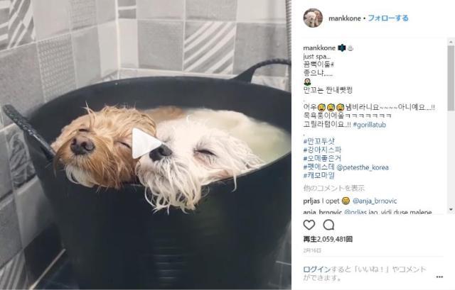 【眼福】2匹仲良く並んでお風呂に入るワンコたち / とろ~んとトロけた表情を見ているだけでこちらまでウットリ…