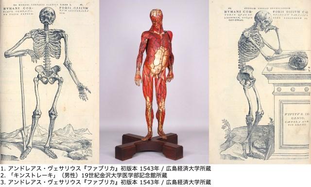 【貴重】ダヴィンチをはじめ人体の謎に挑んできた歴史がわかる特別展「人体 -神秘への挑戦-」が上野の国立科学博物館が開催されます