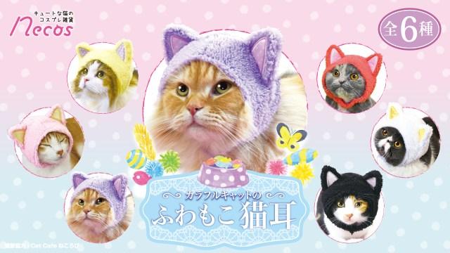 """ニャンてフォトジェニック♡  「猫に猫耳をつける」という """"猫まみれ"""" なコスプレ雑貨が発売されるよ~"""