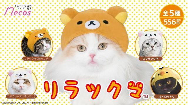 【リラックマ×猫】向かうところ敵ナシの癒し系ニャンコが爆誕しちゃう!! リラックマの被り物が罪深い可愛さです