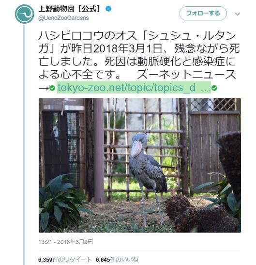 上野動物園のハシビロコウ先輩「シュシュ・ルタンガ」が死亡…悲しみの声がネットに溢れる