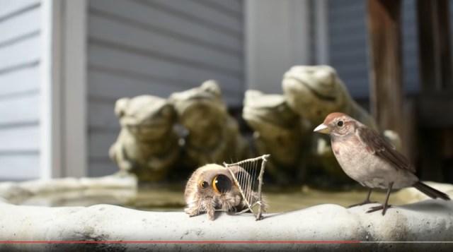 「かわいすぎるクモ」の動画は一度見たら中毒になるっ! 手作りハープでお歌を披露しているとスズメがやってきて…!