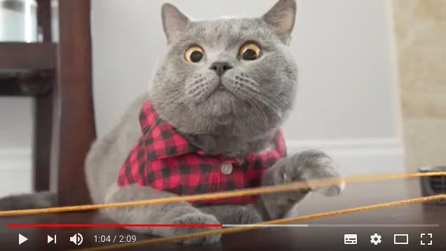 世界一ひょうきんな猫が発見される!! クスッと笑える飼い主との日常を公開しているよ