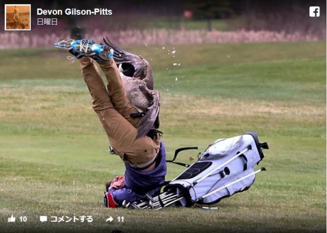 【すまんが笑う】ゴルフ中の高校生にガチョウが襲いかかる…怖そうな展開だけどイイ瞬間の写真が撮れすぎました