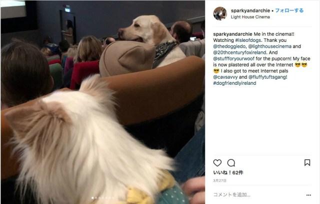 【うらやましい】映画館に犬!犬!犬!  愛犬と一緒に「ワンコ映画」を鑑賞するイベントがアイルランドで開催されました