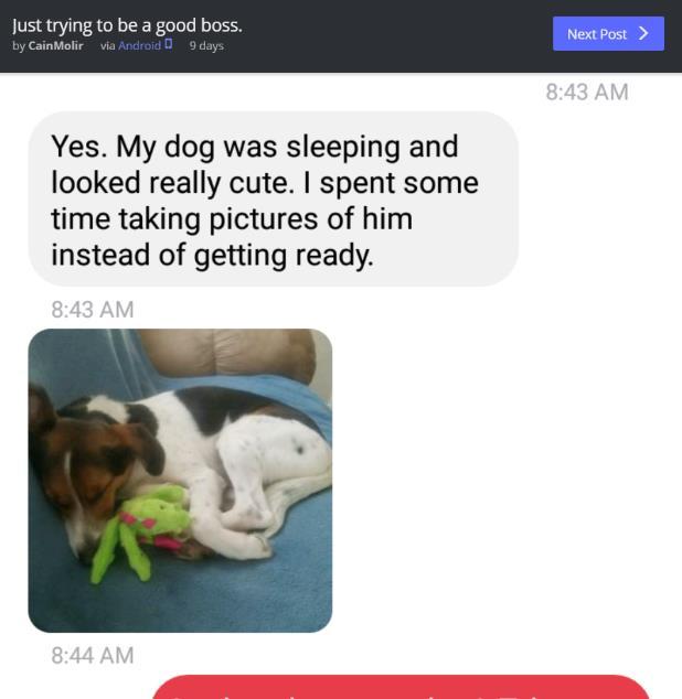 部下が遅刻した理由「犬の寝顔が可愛かったから」 → それを聞いた上司の神対応に驚愕です