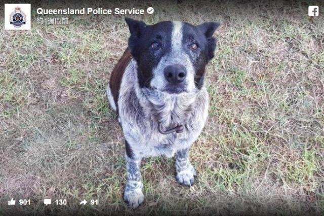 【英雄】迷子になった3歳の少女を年老いたワンコが一晩中守り続ける / 「名誉警察犬」として称えられたのでした