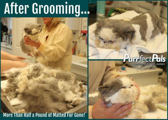 無責任な多頭飼いでひどい状態の猫たちを保護 → 毛と爪をきちんと整えて劇的ビフォーアフターに成功!