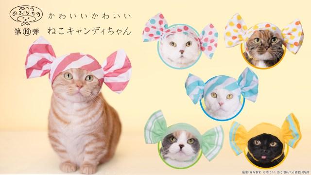 【ねこのかぶりもの】猫さまが甘いキャンディーに大変身! 「かわいい かわいい ねこキャンディちゃん」が発売されますよ♡