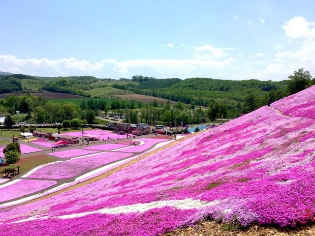 【これぞ絶景】一面ピンクに広がる芝桜に感激! 北海道・網走の「ひがしもこと芝桜公園」を全力でご紹介します!