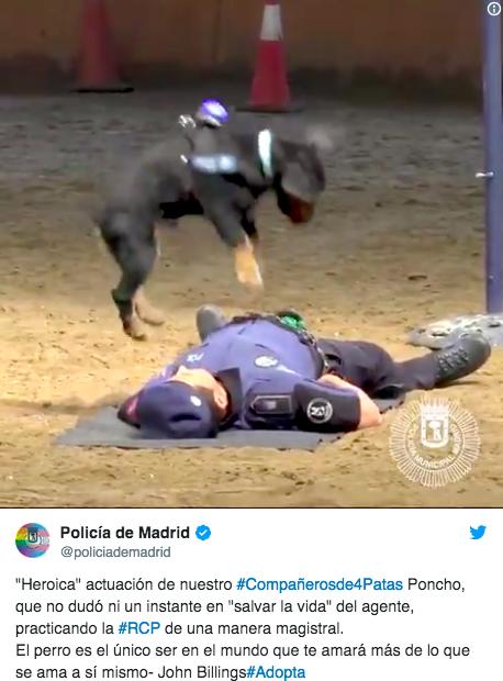 マドリードの警察犬が心臓マッサージを習得!? ちゃんと呼吸があるかどうか確かめる様子をご覧ください